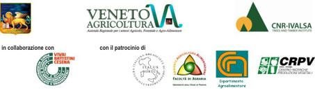 fascia_3_sito