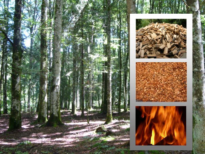 Filiera legno energia