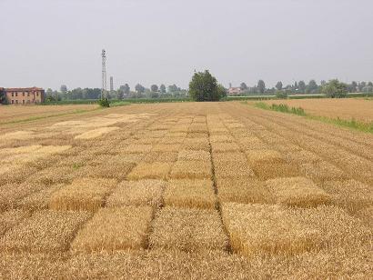 colture estensive