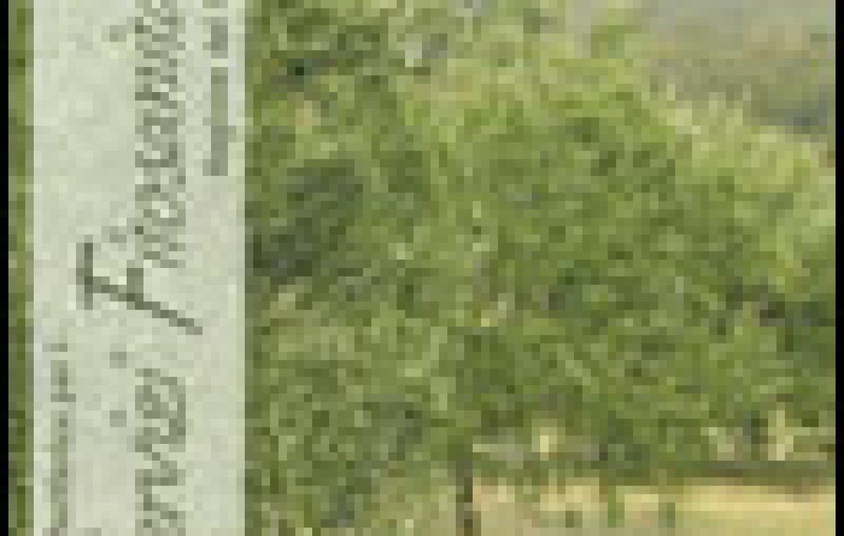 Avversità dell'olivo
