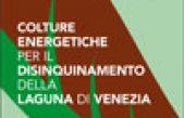 Progetto Biocolt – Colture energetiche per il disinquinamento della laguna di Venezia