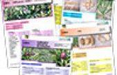 Recupero, conservazione  caratterizzazione di biodiversità in orticoltura