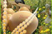 La qualità delle uova biologiche