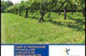 Campo di conservazione vitivinicola per la raccolta del germoplasma/biotipi di cultivar di viti per uva da vino dell'area del Veneto orientale