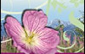 "Il Giardino Botanico Alpino  ""G. G. Lorenzoni "" – Pian Cansiglio"