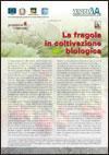 La fragola in coltivazione biologica