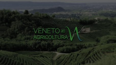 AVVISO INDAGINE DI MERCATO