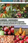 Il Veneto… che frutta! Appunti per una carta d'identità delle produzioni frutticole venete