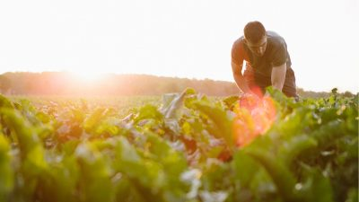 Rapporto 2016 sulla congiuntura del settore agroalimentare veneto