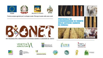 Protocolli di conservazione in Veneto delle antiche varietà di cereali