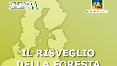 Il risveglio della foresta