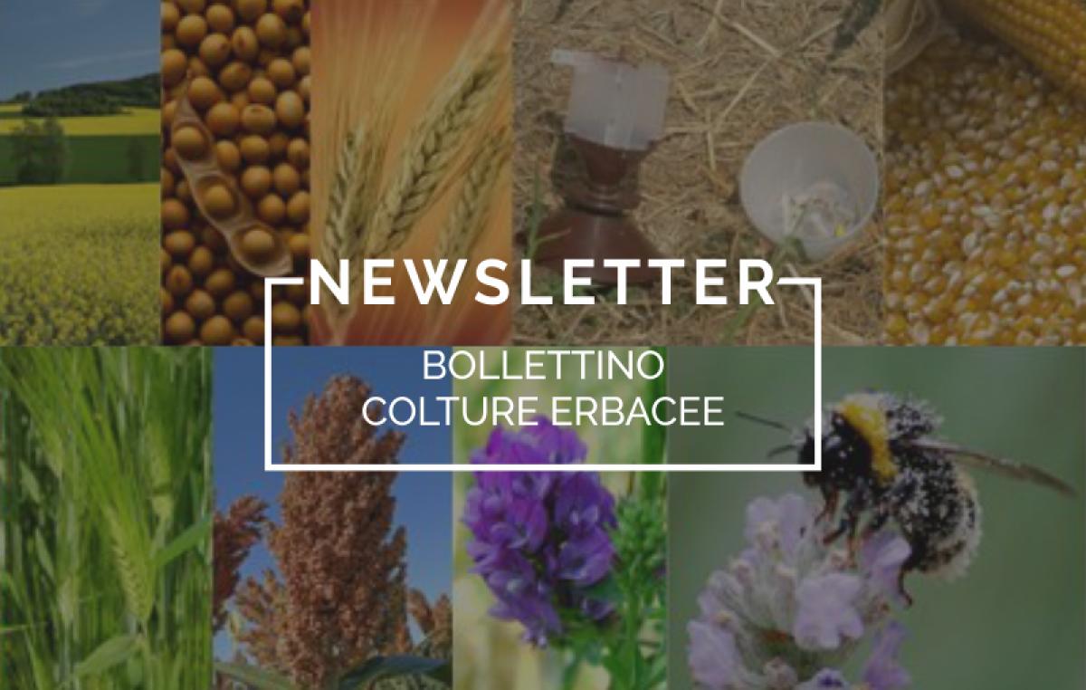 Bollettino Colture Erbacee n. 80/2016 del 13 settembre