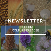 Bollettino Colture Erbacee n. 34 – 24.5.18 DIABROTICA