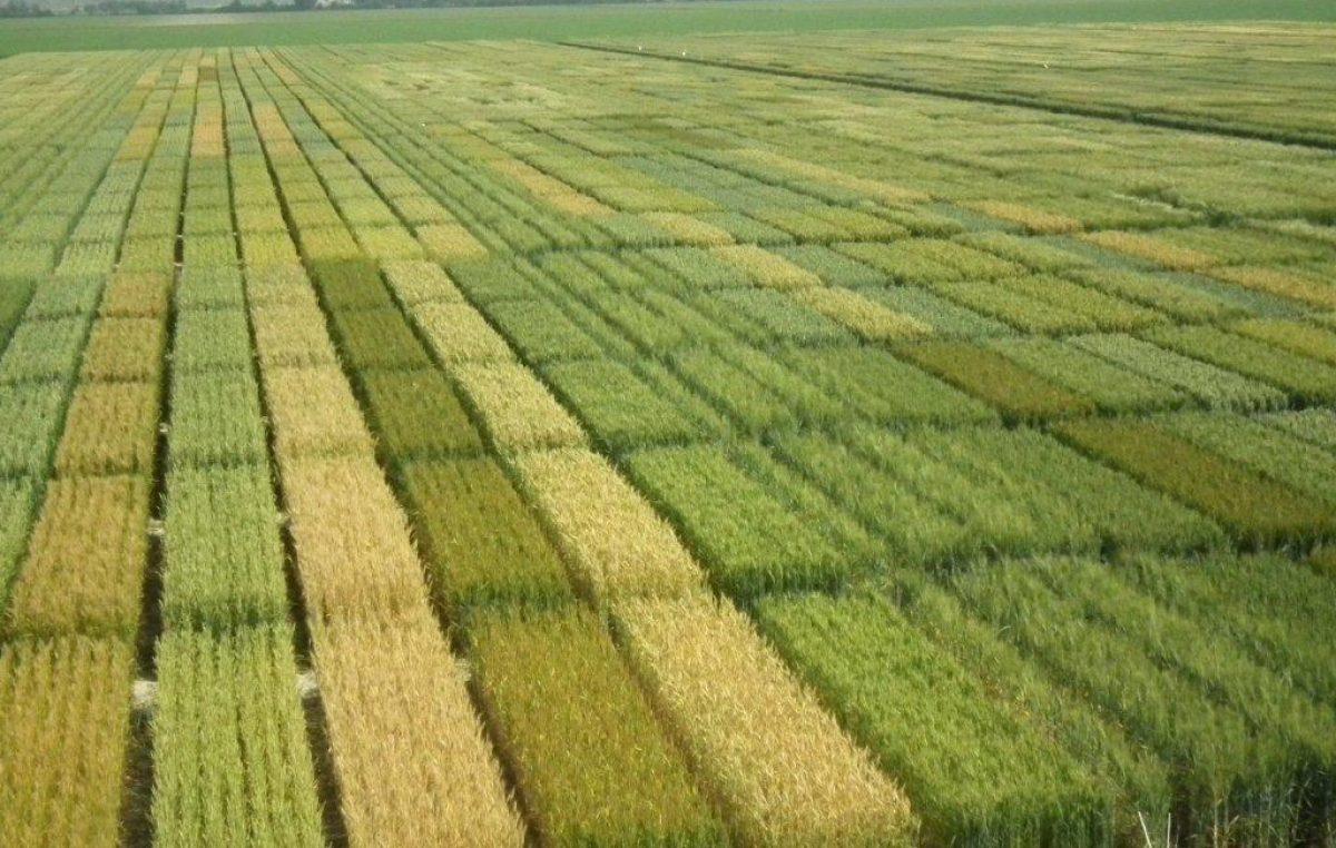 Verso la nuova Politica Agricola Comune, conferenza regionale dell'agricoltura e delle sviluppo rurale