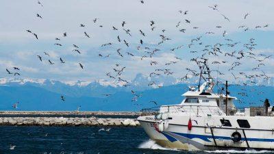 La Pesca in Veneto – 2017