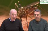 51 Radio Veneto Agricoltura – Arrivano le zanzare, che fare?