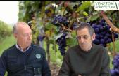 52 Radio Veneto Agricoltura – Guida definitiva ai vitigni resistente
