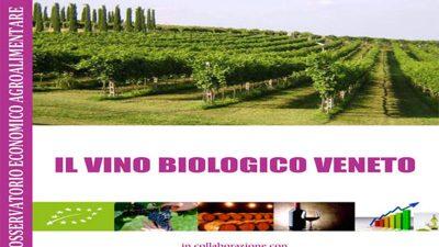 Il vino biologico veneto
