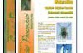 Diabrotica. Verme delle radici del mais – scheda per tecnici