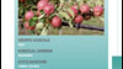 Schede Melo – aggiornamento Manuale