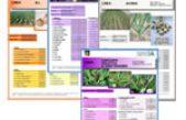 Schede biodiversità in orticoltura: linee di germoplasma orticolo veneto