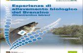 Esperienze di allevamento biologico del Branzino (Dicentrarchus labrax)