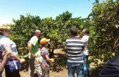 L'innovazione nelle imprese agricole – usi nuovi della conoscenza (AA.VV – libro – aprile 2012)