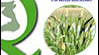 La fitodepurazione per il trattamento di acque di origine agricola e di reflui zootecnici
