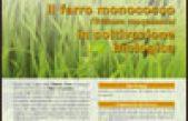 Il farro monococco (Triticum monococco) in coltivazione biologica