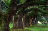 10, 11, 12, 18, 19 dicembre 2014 – Cura e manutenzione degli alberi monumentali – Corso teorico-pratico – Corte Benedettina, Legnaro (PD) – Cod.11-14