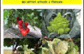 Risultati Sperimentali 2014 nei settori orticolo e floricolo – Centro Po di Tramontana