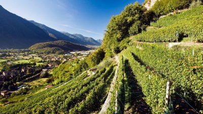 """Lonigo-VI, il Veneto vitivinicolo spinge l'Italia nel """"Billion Dollar Club"""""""