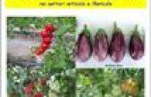 Risultati sperimentali 2016 nei settori orticolo e floricolo – Centro Po di Tramontana