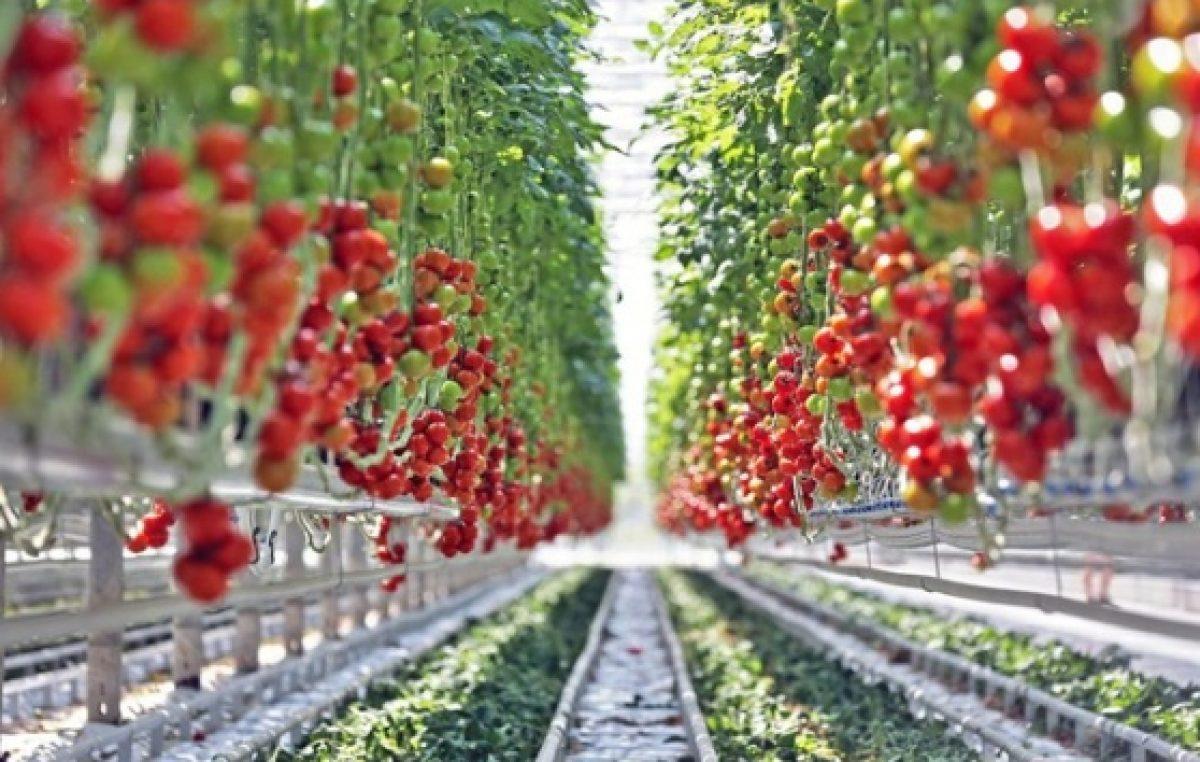 28.06.2017 AGROALIMENTARE VENETO, NEL 2016 VALE 5,7 MILIARDI DI EURO