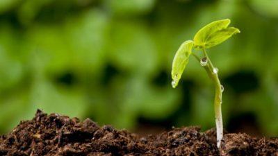 PRODUZIONE BIOLOGICA: SUBITO AL LAVORO SULLE NORME DI ATTUAZIONE