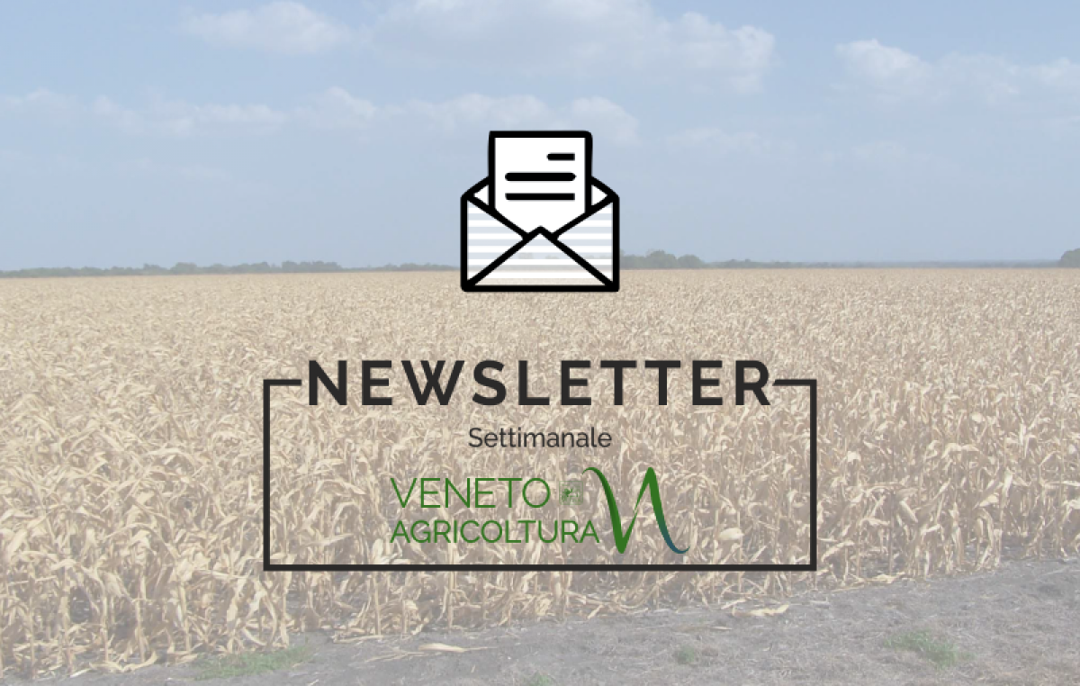 NEWSLETTER n. 44/2018 05 Dicembre