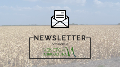 NEWSLETTER n. 46/2018 19 Dicembre