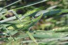 foto larva
