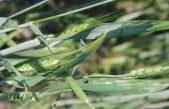 AGROALIMENTARE VENETO, ANDAMENTO 2018: IMPRESE IN LEGGERO CALO