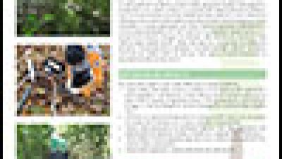 Progetto RedAFI – Forested Infiltration Areas project (final results)