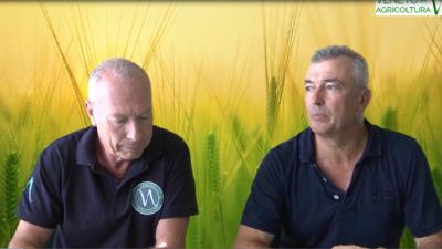 17 Radio Veneto Agricoltura – Dai cereali antichi a quelli moderni