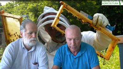 19 Radio Veneto Agricoltura – Importante binomio agricoltura/apicoltura