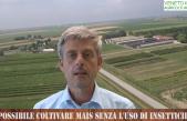 E' possibile coltivare il mais limitando l'uso degli insetticidi?