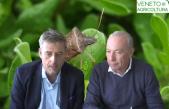 25 Radio Veneto Agricoltura – L'invasione della cimice asiatica