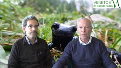 26 Radio Veneto Agricoltura – Specie ombrello, monitoraggi e biodiversità