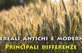 Quali sono le principali differenze tra i cereali antichi e quelli moderni?