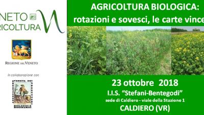 AGRICOLTURA BIOLOGICA: rotazioni e sovesci, le carte vincenti