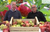 28 Radio Veneto Agricoltura – Mele, dalla storia alle caratteristiche