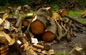 MALTEMPO, BIOMASSA FORESTALE:DAI BOSCHI DEVASTATI ENERGIA E CALORE