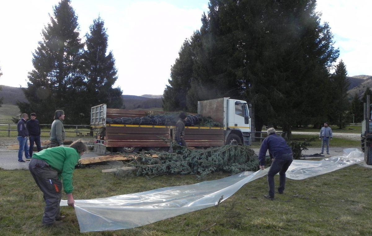 """Alberi di Natale al Quirinale. Quest'anno provengono dal Cansiglio e dal Trentino, da zone distrutte dalla tempesta """"Vaia"""""""